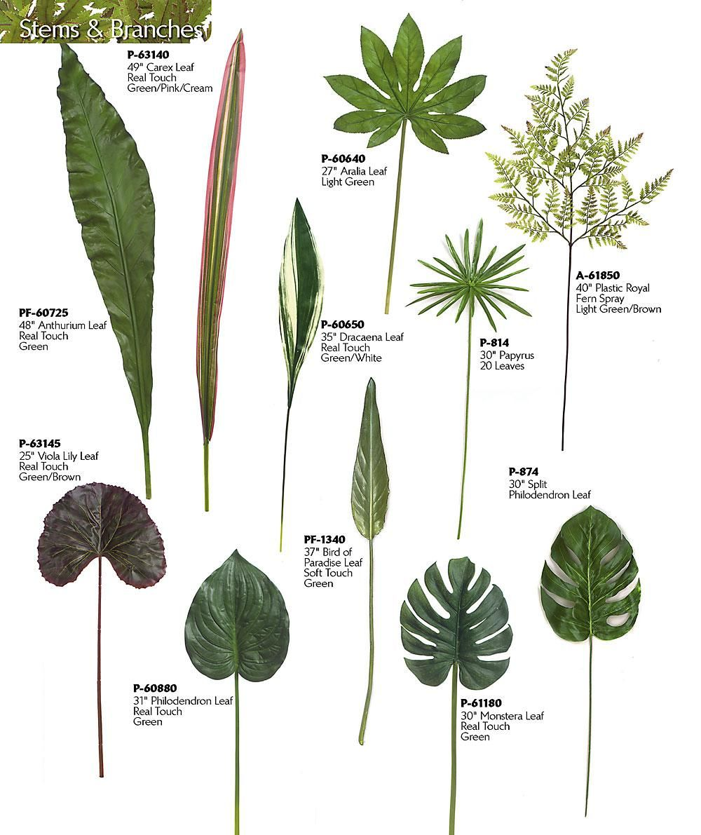 Lilies Types Of Leafs: Papyrus Leaves - Google Search