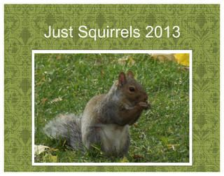 """2013 Just Squirrel calendar with beautiful full-blown photos of squirrels. Includes U.S. and Canadian Holidays. 11"""" x 8.5"""" with coil binding on white interior paper. Excellent gift for Squirrel lovers!"""