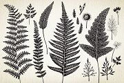 Botanical elements. More than 68! - Illustrations - 4