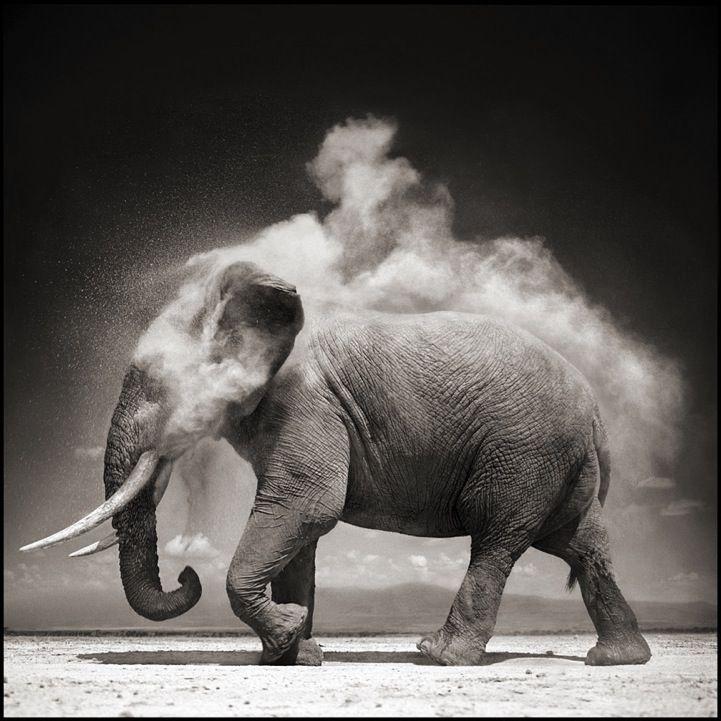 svartvita bilder djur