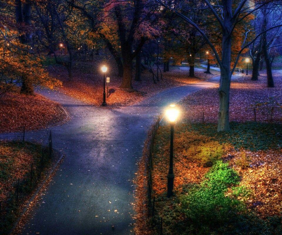 Night walk in the park