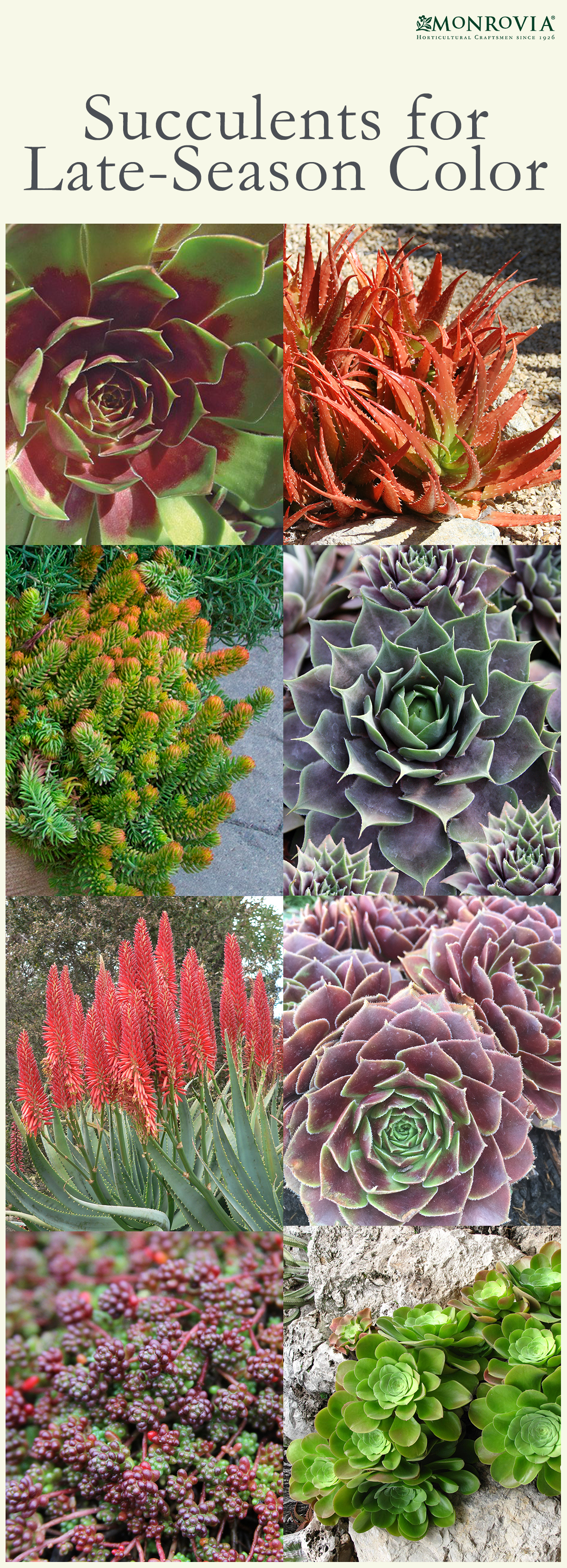 Succulents For Late Season Color Succulents Have Become Stars Of
