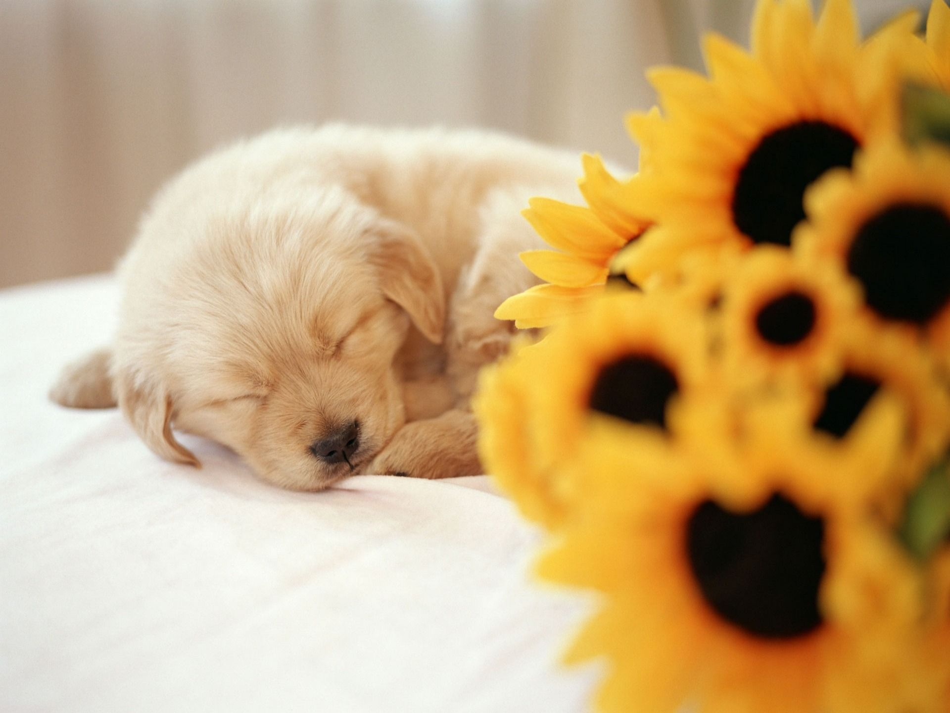 puppy wallpaper dogs animals wallpapers for free download about | 3d