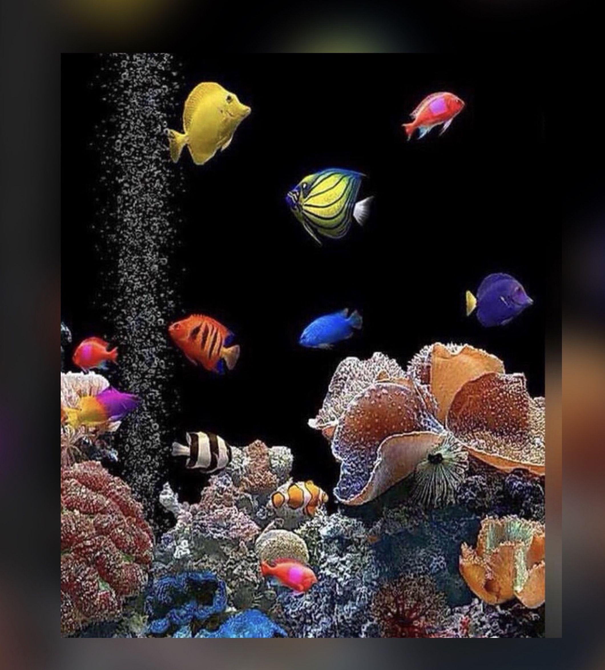 вашему движущаяся картинка с рыбками на телефон часто молодожены