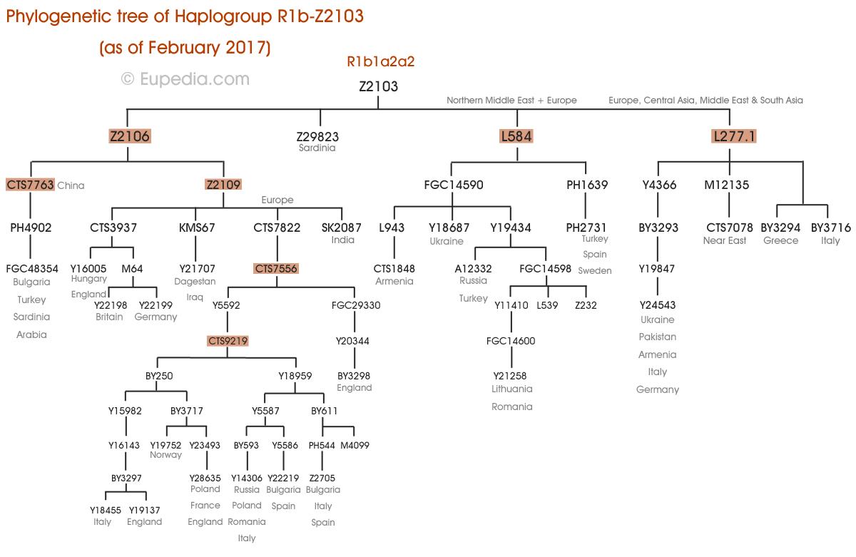 Phylogenetic tree of haplogroup R1b-Z2103 (Y-DNA) - Eupedia