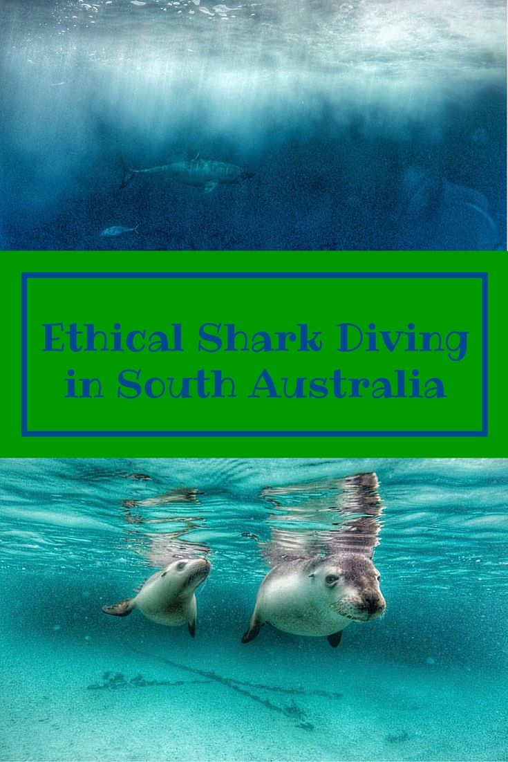 Wildlife experiences and ethical shark cage diving in South Australia