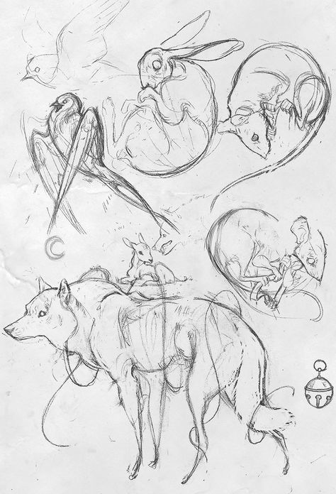 Animal art drawing sketches inspiration 61+ ideas