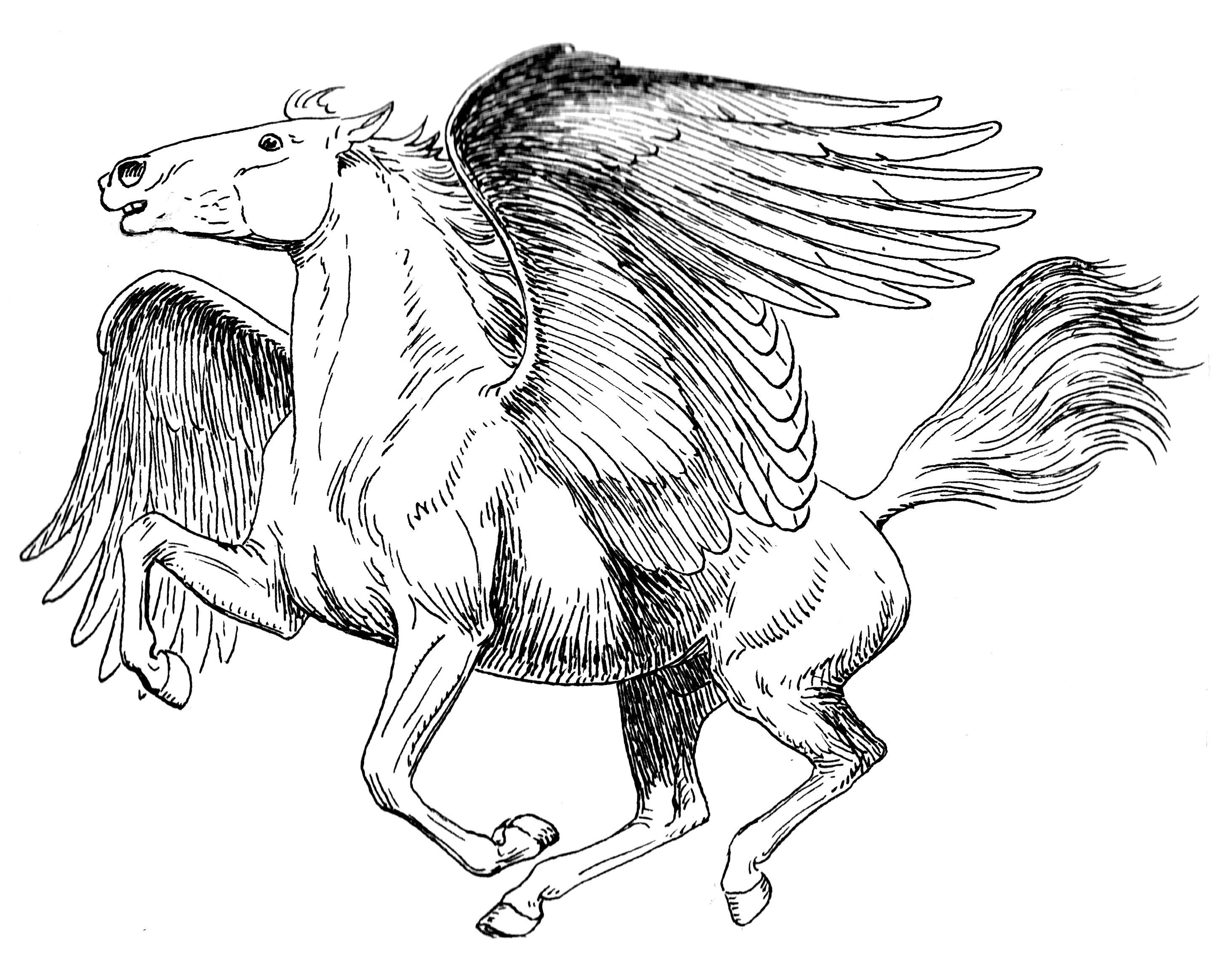 Greek Mythical Creatures Pegasus | LineArt: Fantasy in 2018 ...