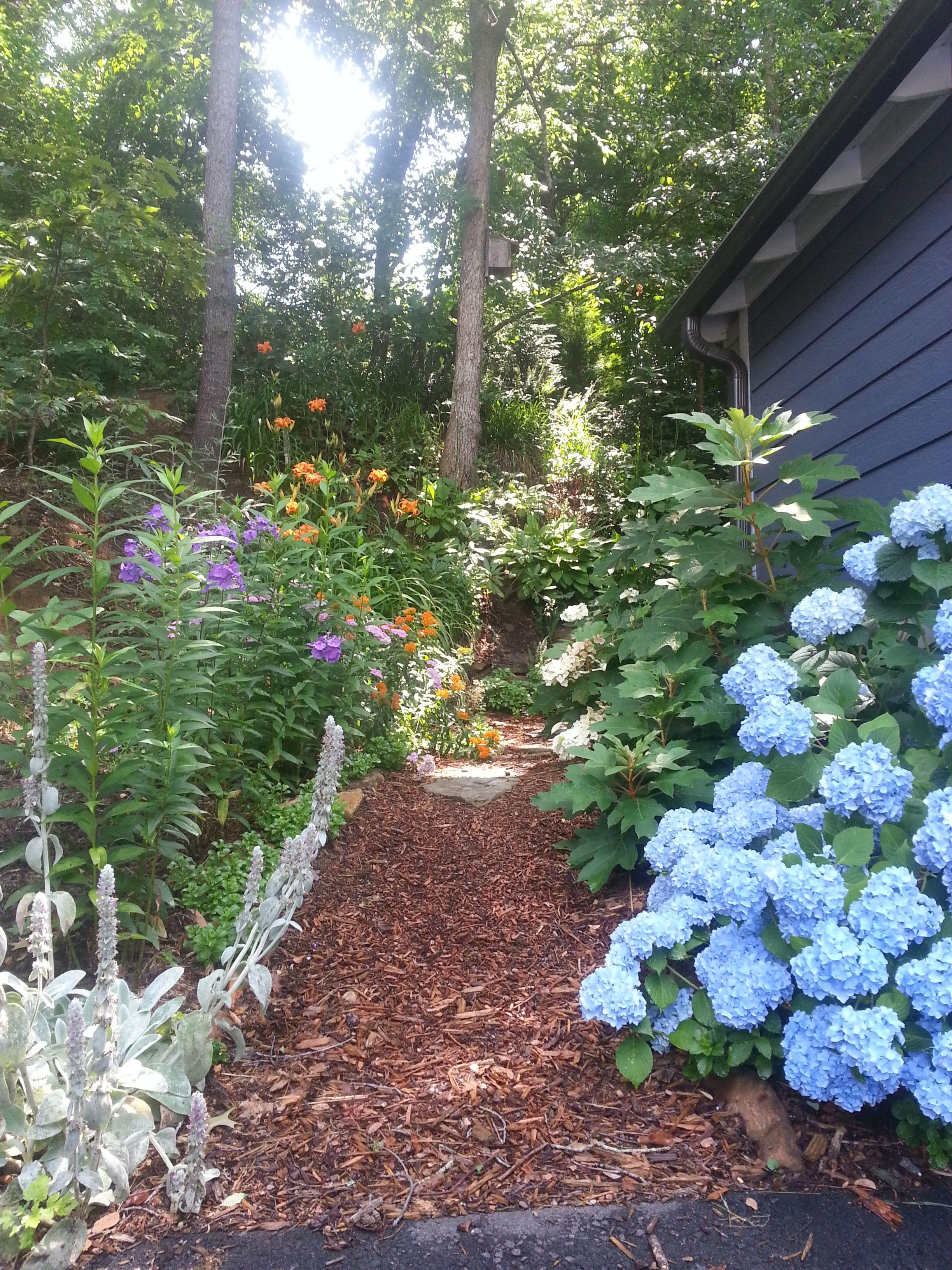 entry way to backyard #hydrangeas