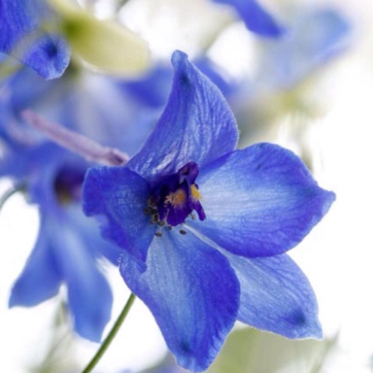 Delphinium Lovely To Look At Pinterest Delphiniums