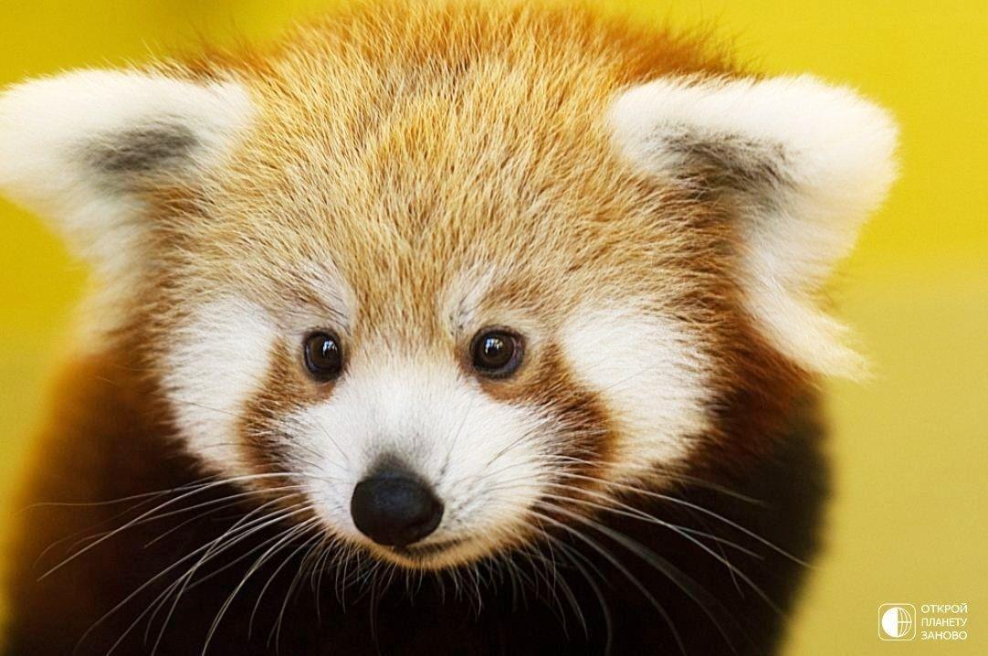 этих фото всех животных из красной книги защитить декоративную поверхность