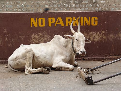 37+ Why are cows sacred in india inspirations