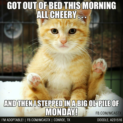 Stepped In A Steaming Pile Of Monday Funny Good Morning Quotes Good Morning Funny Monday Humor