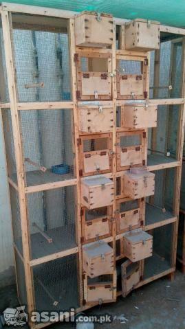 Master Cages In Pakistan Diy Parakeet Cage Pet Bird Cage Big Bird Cage