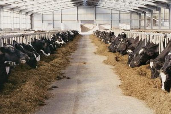 How To Raise Beef Cattle For Profit On A Small Farm Ehow Beef Cattle Cattle Farming Cattle
