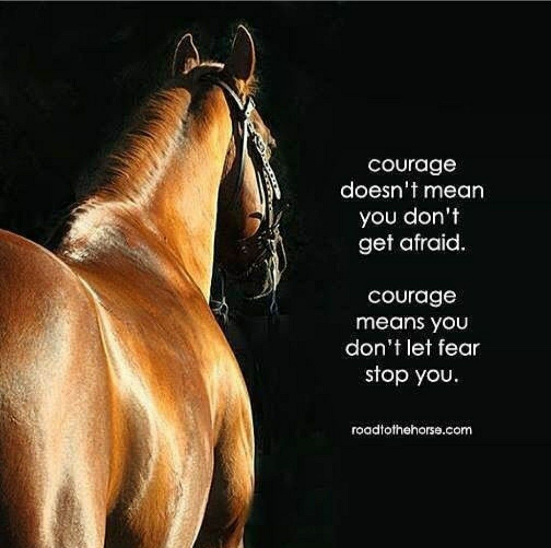 Pin De Biapiragine Em Equestrian Things Cavalos