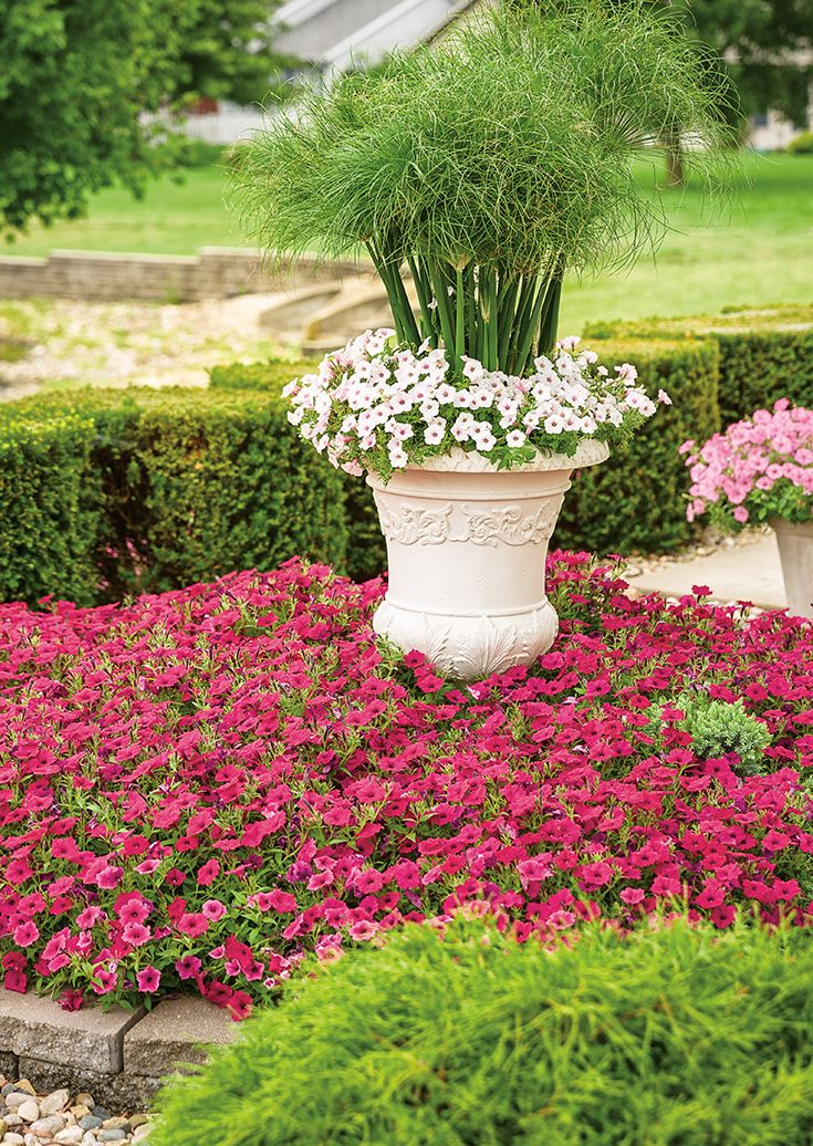 Add A Tall Focal Point To Your Landscape With A Beautiful Urn Full Of Graceful Grasses Prince Tut Cyperu Large Flower Pots Front Yard Flowers Flower Pot Design