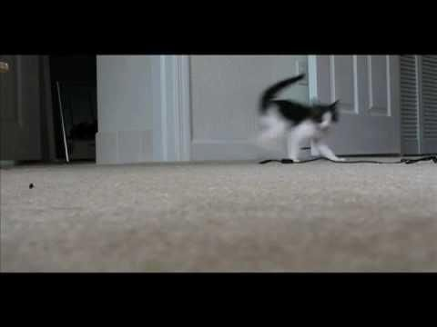 Cat's Funny Walk