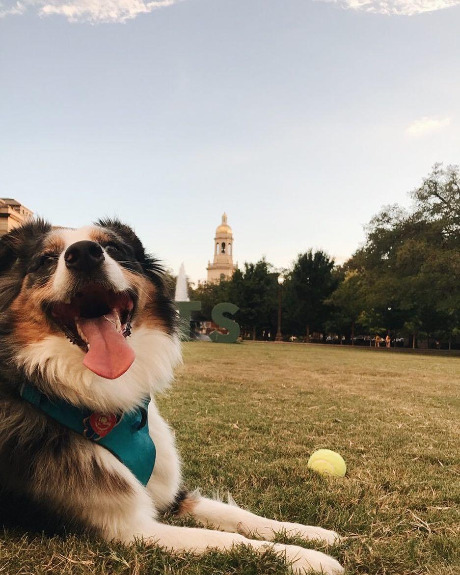 8a7696191a1 Baylor Pups 🐶 | Baylor Pets | Dogs, Baylor university, Pets