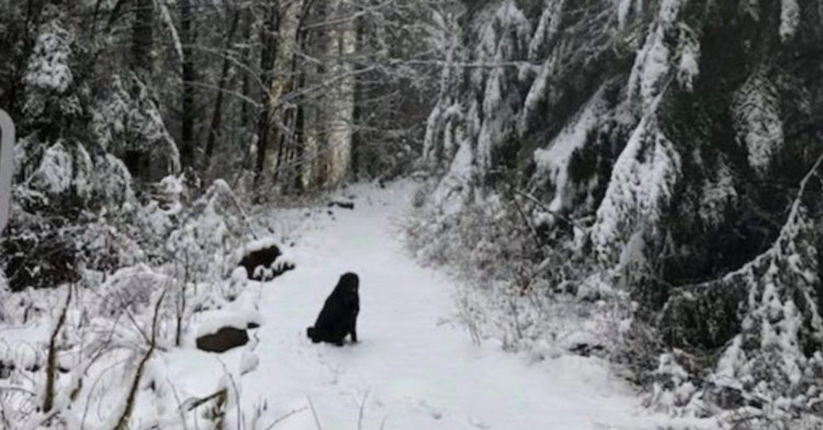 A Strange Dog Wouldn't Leave Them Alone On Their Hike. Then They Noticed The Note On His Collar #animalrescue
