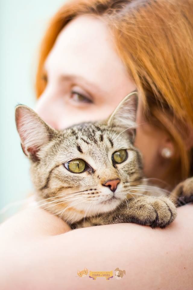Um estudo publicado neste mês na revista norte-americana Preventive Veterinary Medicine mostrou que conversar e fazer carinho no seu gato faz bem para a saúde...