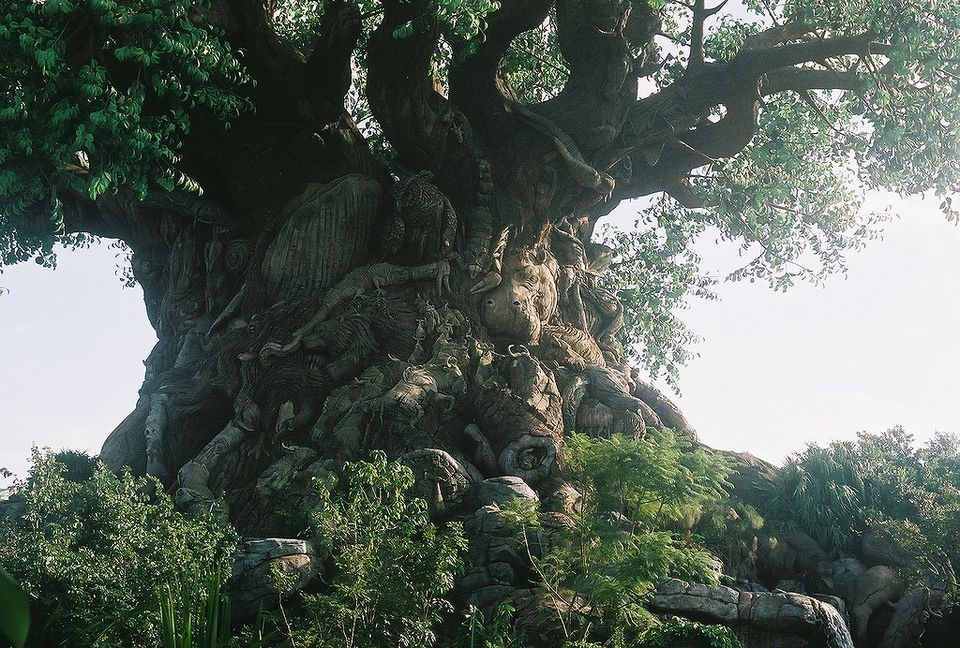 фото необычные деревья мира