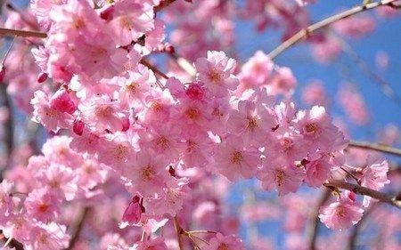 Ini Dia Bunga Bunga Tercantik Di Dunia Most Beautiful Flowers Beautiful Flowers Pictures Most Beautiful Flower Pictures