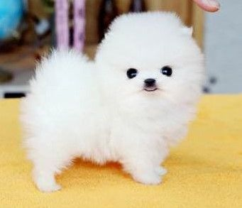 Cute Small Fluffy Dog Names