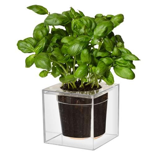 A R Store Cube Planter Product Detail