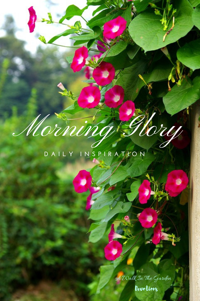 Start Your Day With Morning Glory A Daily Scripture Verse In 2020 Spring Bulbs Garden
