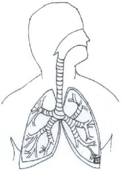Learn the parts of the respiratory system. | Bathroom Ideas ...