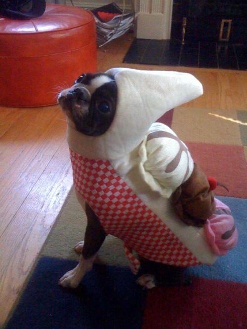 Boston Banana Split Pet Halloween Costumes Dog Halloween Dog