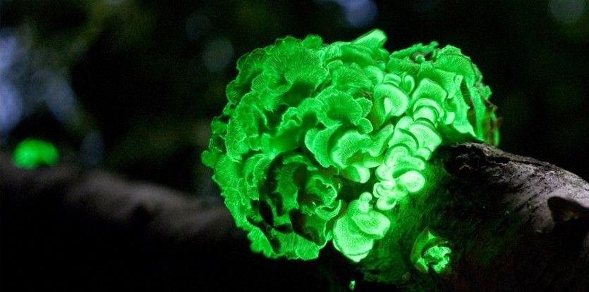 Troquer ses ampoules contre des plantes lumineuses - SoonSoonSoon