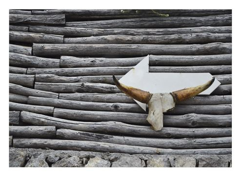An arrow to Bufala by Annie Poissant