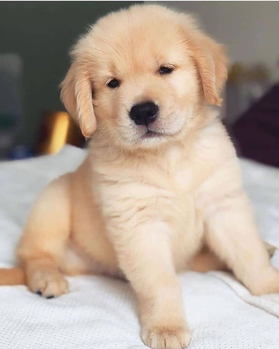 This Little Guy Is Way Too Cute To Share What Would You Name Him In 2021 Very Cute Dogs Baby Dogs Very Cute Puppies