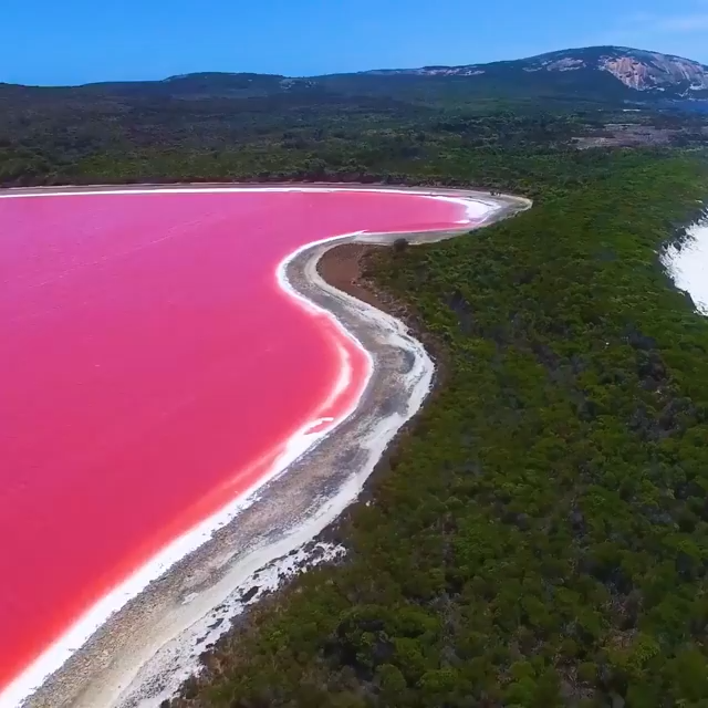 The Halobacteria is known to produce red pigments which when mixed with salt-tolerant Dunaliella Salina, creates a stunning strawberry milkshake color.  LEARN MORE >   #Australia #travel #interestingfacts #ocean #water