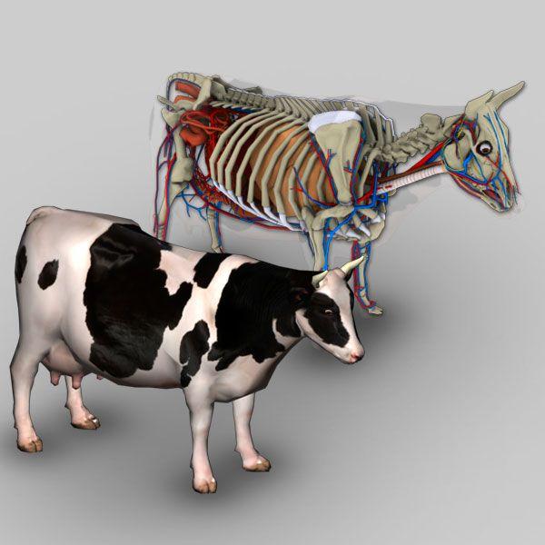 Software Anatomia Bovina 3D | Pinterest
