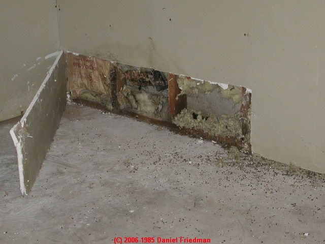 How We Survived Toxic Black Mold Exposure Safe Housing