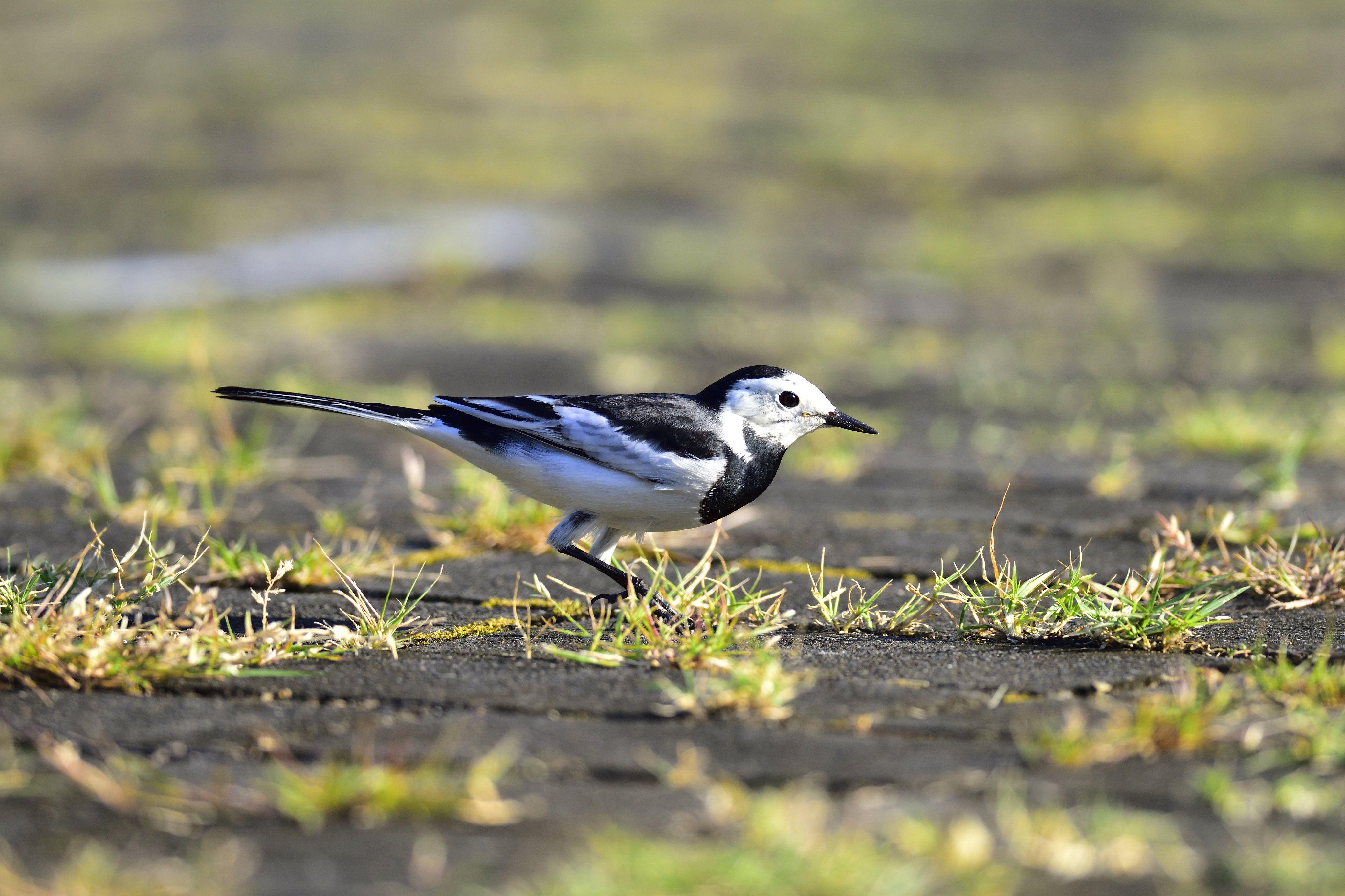 pin on animaux oiseaux