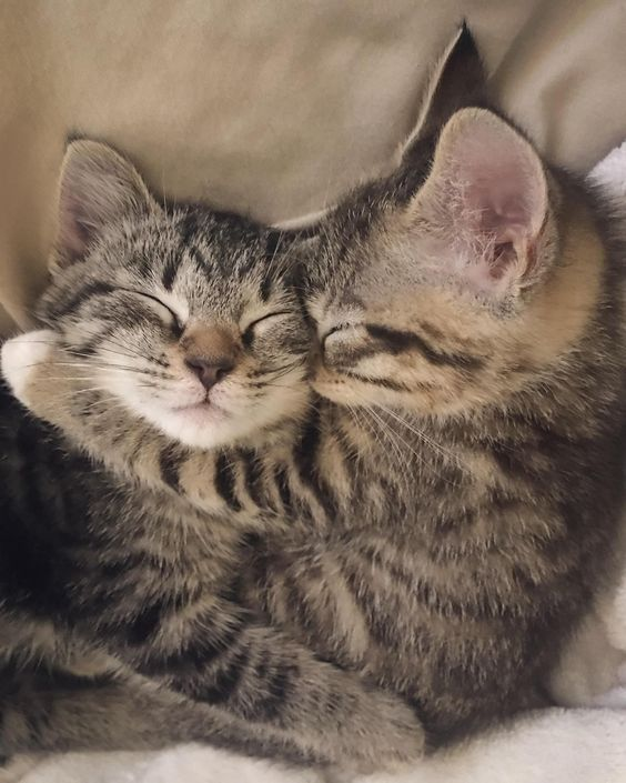 5 Amazing Facts About Your Cats Sleeping Habits