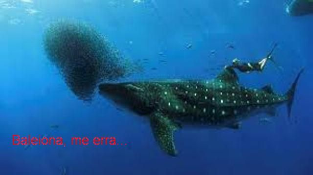 Baleia faminta
