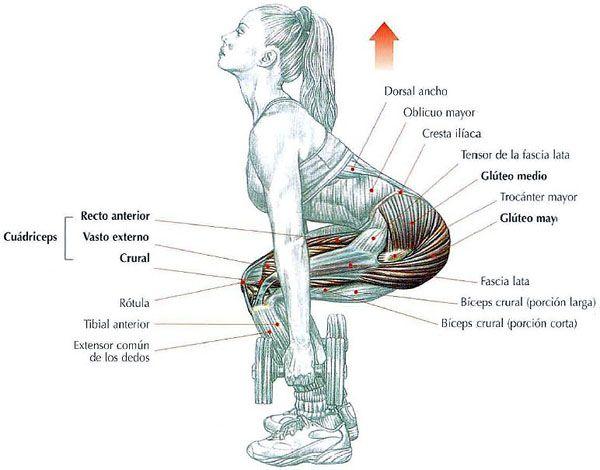 Glúteos, piernas, abdominales y espalda en una sola sesión