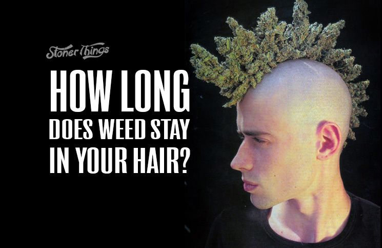 How Long Does Weed Stay In Your Hair Cannabis Festival