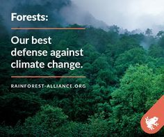 Happy International Day of Forests! Not only do forests provide habitat, livelihoods, and clean air, they're also vital to the fight against climate change.