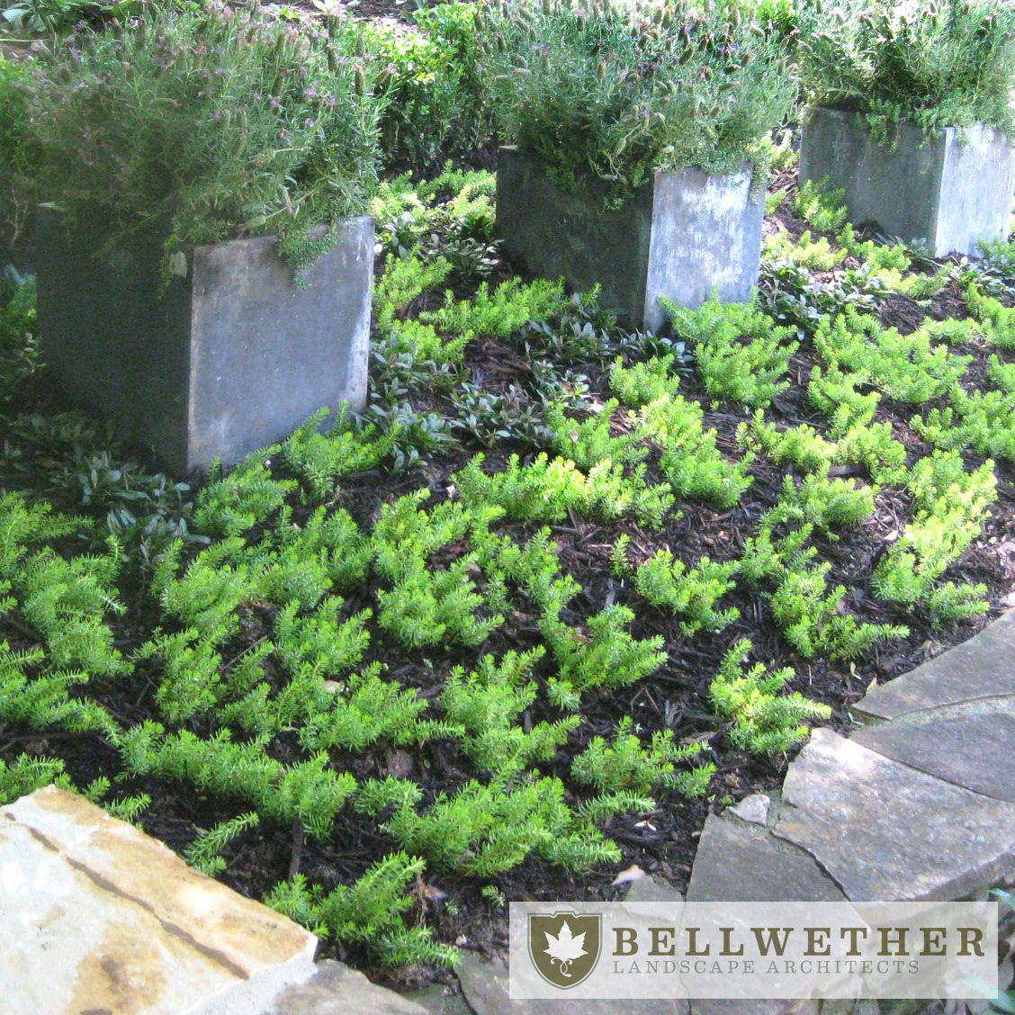 Landscape architect atlanta ga - Bellwether Landscape Architects Located In Atlanta Ga