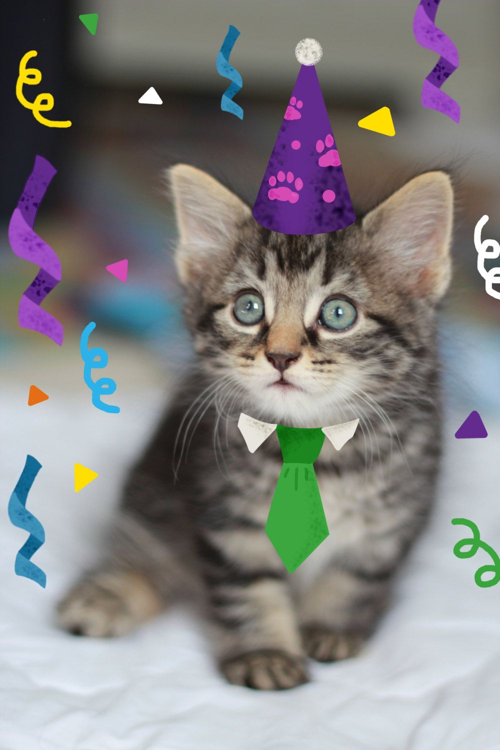 Dog Cat Happy Birthday Card Pack Of Four Funny Cute Card From Pet Pet Lover S Bi Happy Birthday Funny Cats Happy Birthday Cards Happy Birthday Pictures