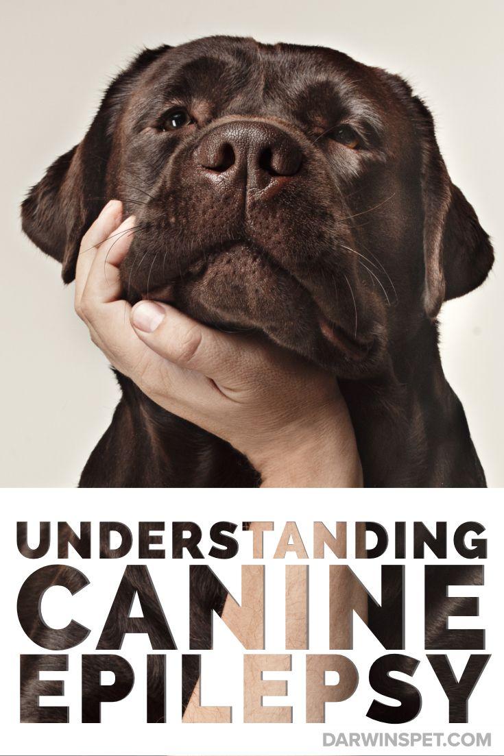 Canine epilepsy dog seizures epilepsy in dogs epilepsy