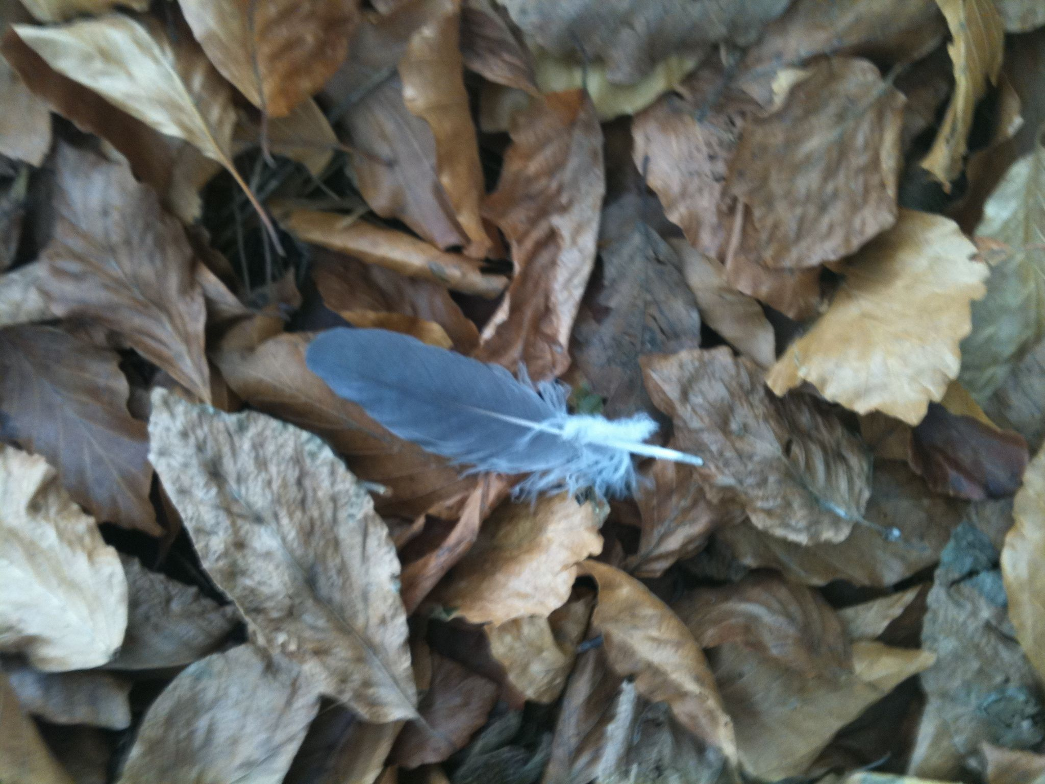 My blue feathered friend left me a gift....