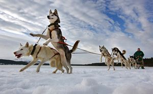 35 Sled Dog Names With Special Meanings Dog Names By Categories