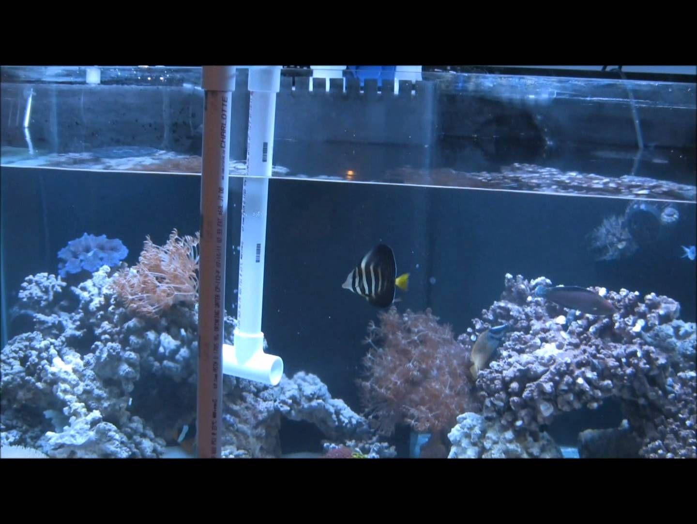 Freshwater aquarium fish water change - No Bucket Water Change Easiest Way 120 Gal Reef